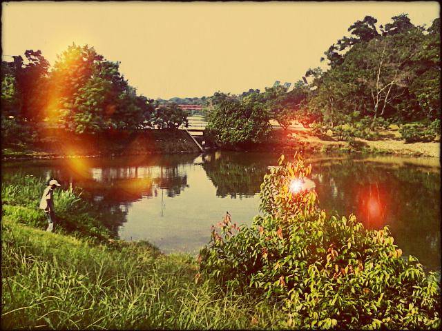 11 danau dan hutan